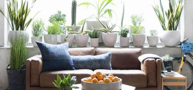 خرید جدیدترین وسایل تزیینی برای دکوراسیون خانه و آشپز خانه با لوازم و اکسسوری های خاص